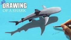 3D Drawing of a Shark - Speed Draw | Jasmina Susak