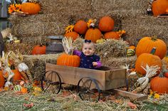 pumpkin patch photography - Google Search