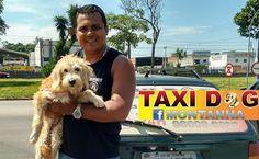 TAXI DOG MONTANHA TRANSPORTE DE ANIMAIS NO RIO DE JANEIRO: LUMA (Adotada) 19/12/2015 --- Mais uma missão cum...