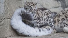www.animalphotography.ch