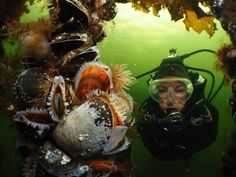 Raymond Wennekes is de nieuwe Nederlands Kampioen #onderwaterfotografie! Hierbij zijn inzending in de categorie #groothoek met duiker. Check de website voor meer info!