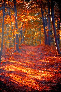 Autumn...lovely to walk in the woods, crunching leaves underfoot