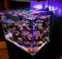. Coral Reef Aquarium, Saltwater Aquarium Fish, Saltwater Tank, Marine Aquarium, Freshwater Aquarium, Aquarium Ideas, Aquarium Design, Nano Cube, Cool Fish Tanks