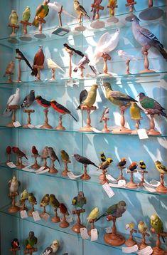 Les oiseaux naturalisés de Deyrolle