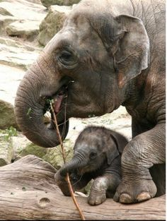 Beautiful elephant and his baby