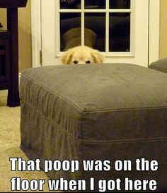 """That poop was on the floor when I got here."" #dog #humor #funny"