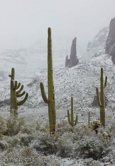 Snow -the Sonoran Desert, Arizona http://itz-my.com