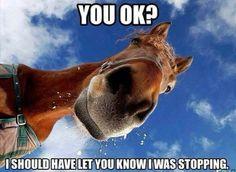 This may be me the next horseback riding trip