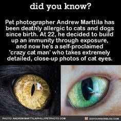 Pet photographer Andrew Marttila has been deathly allergic to cats and dogs since birth. At 22, he decided to build up an immunity through…