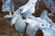 #Ostara #Bunny
