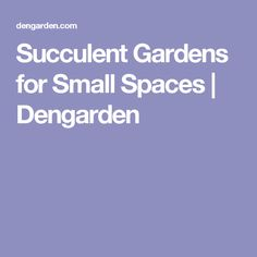 Succulent Gardens for Small Spaces | Dengarden