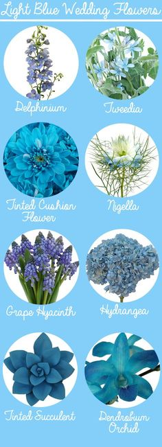 If you are the imaginative type, a simple floral craft book will give you all the tips and tool lists required to produce your own customized wedding flowers that show your personal style. Blue Wedding Flowers, Wedding Colors, Wedding Bouquets, Wedding Blue, Blue Flowers Bouquet, Blue Weddings, Autumn Wedding, Spring Flowers, Colorful Flowers