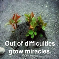 Out of difficulties grows miracles.