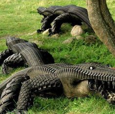 """Another use for old tires! - - -unique yard art - a """"tired"""" alligator - - -http:/. Tire Craft, Tyres Recycle, Recycled Tires, Reuse Recycle, Recycled Crafts, Recycled Materials, Recycled Yard Art, Reduce Reuse, Recycled Rubber"""