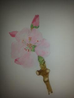 blossom watercolor 2014