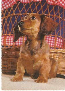 Dachshund with a picnic basket.  View from the Birdhouse: Dear Abby: Dachshund Postcards