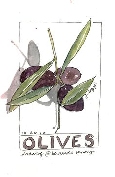 Olives  original watercolor,  via Etsy. #essenzadiriviera.com