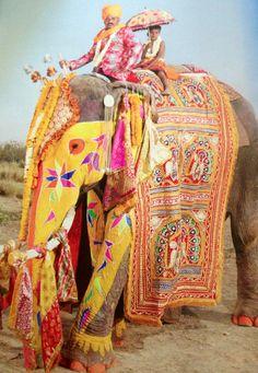 parade of the painted elephants - Jaipur, India