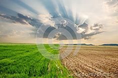 Two different parcels on a field with different stages of plant growth and a nice contrast between green and brown and an atmospheric phenomenon of sun rays bursting through a cloud Plant Growth, Sun Rays, Green And Brown, Spring Time, Different Colors, Fields, Contrast, Clouds, Nice