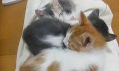 Secret Kitten (video)