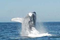 Activités Baleines à Dunes de Dovela