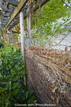 Compost fence, wall of small branches decomposing in backyard sustainable garden; Jennifer Carlson garden