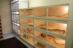Your reptile room! - Page 8