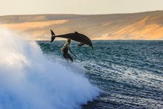 In this perfectly timed photograph by Matt Hutton, we see a dolphin and surfer riding a wave at Jacques Point in Kalbarri, Australia. Great Barrier Reef, Photos Du, Cool Photos, Lac Michigan, Monument Valley, Wow Photo, Photo Voyage, Mont Fuji, Water Photography
