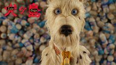 Koirat olivat isossa osassa Isle of Dogsin teossa. Elokuvantekijät puhuvat koirista ja niiden roolista elämissämme. Katso video linkistä!  ISLE OF DOGS elokuvateattereissa 11.5.2018 🎬  #IsleofDogs #WesAnderson #ScarlettJohansson #BryanCranston #EdwardNorton #FrancesMcdormand #GretaGerwig #LievSchreiber #TildaSwinton #BillMurray #JeffGoldblum #HarveyKeitel #animaatio #komedia #seikkailu #koirat #elokuva #leffa #NordiskFilmFinland