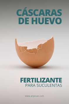 Egg shells as fertilizer or homemade fertilizer for succulents,You can find Shells and more on our website.Egg shells as fertilizer or homemade fertilizer for succulents, Cactus Plants, Garden Plants, Farm Lifestyle, Mini Cactus, Indoor Garden, Plant Hanger, Gardening Tips, Flower Pots, Garden Landscaping