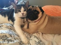 My dog and cat are Milo and Otis Milo And Otis, Opposites Attract, Doge, Adorable Animals, Dog Cat, Miniature, Fur, Pets, Instagram