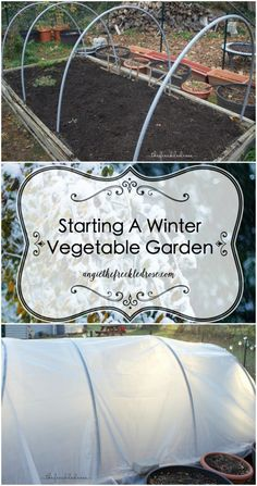 Starting A Winter Vegetable Garden Angie The Freckled Rose is part of Fall garden vegetables - Here in zone New England, the growing season is so short By the end of November, trees have shed their leaves and plants have gone into hibernation mode Gardening For Beginners, Gardening Tips, Rose Winter, Pinterest Foto, Growing Winter Vegetables, Vegetable Garden Planner, Vegetable Gardening, Veggie Gardens, Garden Soil