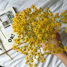 Картинка с тегом «yellow, flowers, and aesthetic»