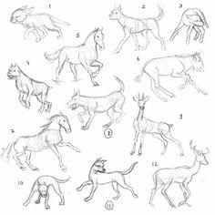 animal poses - Google Search