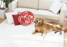 Food Pillows, Labrador Retriever, Corgi, Animals, Labrador Retrievers, Corgis, Animales, Animaux, Labrador