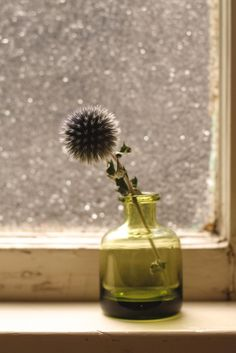 thistle . window