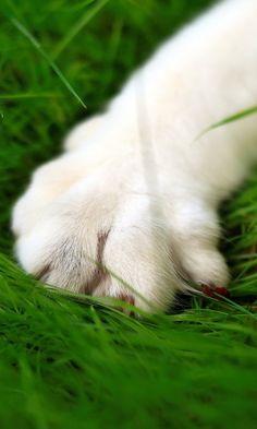 480x800 Wallpaper cat, paw, grass, fur