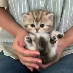 Beautifull litlle baby cats - So niedlich - Animals Cute Kittens, Cute Little Kittens, Funny Cute Cats, Cute Baby Cats, Kittens And Puppies, Cute Cat Gif, Cute Funny Animals, Cute Baby Animals, Cute Dogs