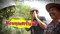 เกษตรไทยไอดอล ตอน อินทผลัม..ทำเงิน 25 ก.ค.59