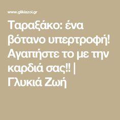 Ταραξάκο: ένα βότανο υπερτροφή! Αγαπήστε το με την καρδιά σας!! | Γλυκιά Ζωή