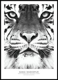 Zwart-wit poster met tijger
