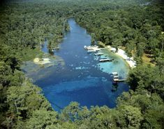 "Wakulla Springs State Park. The spring at the lower edge of the photo is 175 feet deep, and the water is crystal clear. Alligators, manatees & tons of other wildlife abound. As an interesting side note, they filmed ""The Creature from the Black Lagoon"" and three Tarzan movies at the spring and in the park. (Tallahassee Democrat - September 2007)"
