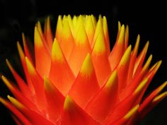 """https://flic.kr/p/eb2M9f 