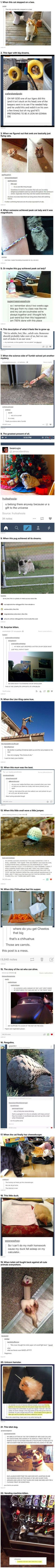 We have rounded up some funny and cute Tumblr posts that just might break the internet.