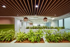 The design of this new office promotes employee wellness and creates an open and transparent workplace that carves out spaces for privacy, collaboration and community Employee Wellness, Green Walls, Jakarta, Workplace, Collaboration, Pergola, Carving, Outdoor Structures, Community