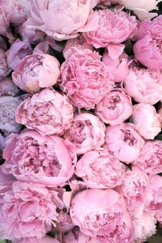 Terrific No Cost Pink Flowers peonies Ideas The reddish rose is a nice worldwide symbolic representation of love and also passion. Plant Wallpaper, Pink Wallpaper Iphone, Flower Wallpaper, Iphone Backgrounds, Iphone Wallpapers, Wallpaper Backgrounds, Spring Wallpaper, Purple Peonies, Pink Roses