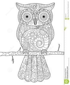 Owl On A Branch Coloring Book For Adults Vector Illustration Poster Anti Stress Adult Zentangle Style Bird Black And White Lines