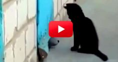 I Can't Believe This Cat And How He Saves This Puppy! You'll Be Amazed At 0:41!   The Animal Rescue Site Blog