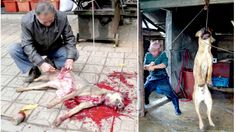 South Korea is one of the biggest dog eating nations on Earth. Dog meat is consumed on a daily basis and most residents belie...