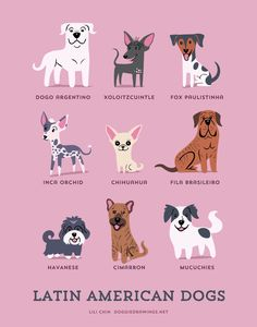 Dogs-Of-The-World-Cute-Poster-Series-Shows-The-Geographic-Origin-Of-Dog-Breeds8__880